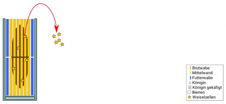 Totale Bauerneuerung mit Brutverwertung nach Severin Hummel: Schritt 5