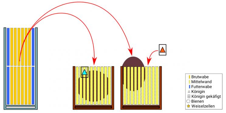 Totale Bauerneuerung mit Brutverwertung nach Severin Hummel: Schritt 6