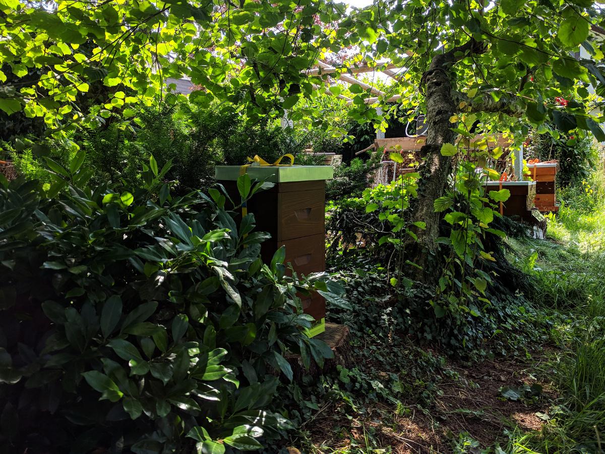Bienenstand Allmendingen