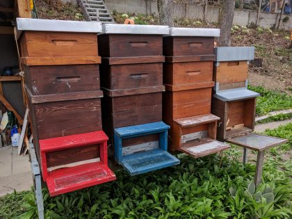 Honigraum mit den ersten 6 - 8 Honigrähmchen ist aufgesetzt.