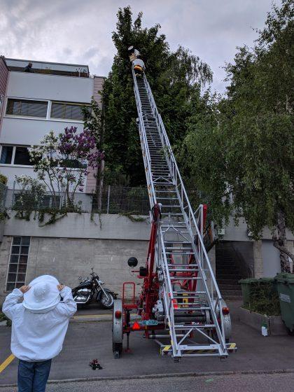 Schwarm fangen mit Kehrsatzer Feuerwehr