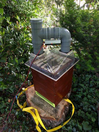 MP Limette: Der Schwarm vird gegen Varroa-Milben behandelt.