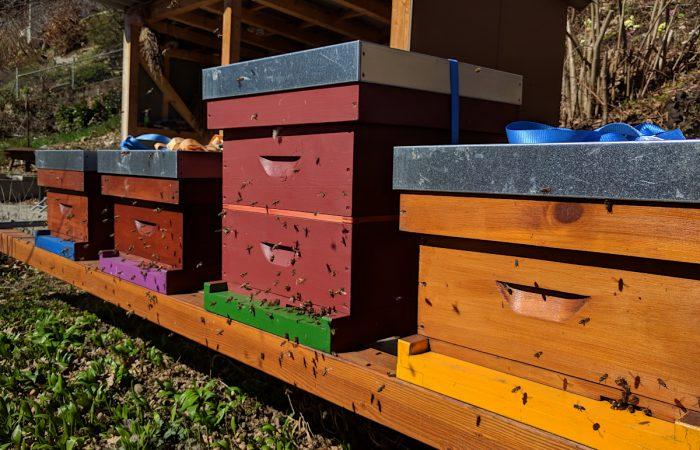 Bienenstand Kehrsatz: Hochbetrieb
