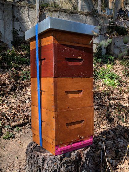 MP «Sagex»: Um mehr Bienenmasse zu erhalten, wurde eine dritte Zarge mit Klickrähmchen und Mittelwänden aufgesetzt.