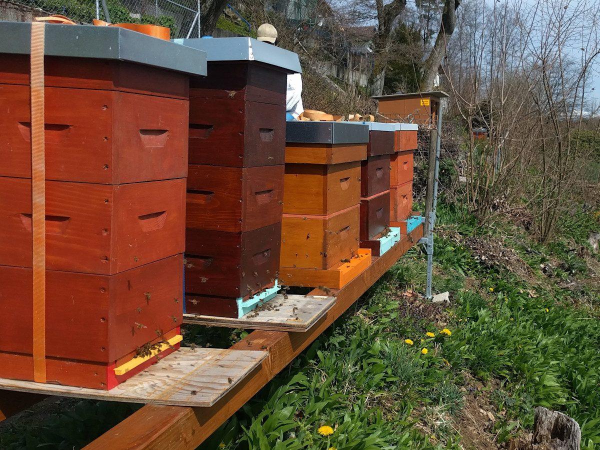 Flugbetrieb 14:10: Kaum ist es etwas wärmer werden die Bienen sofort aktiv.