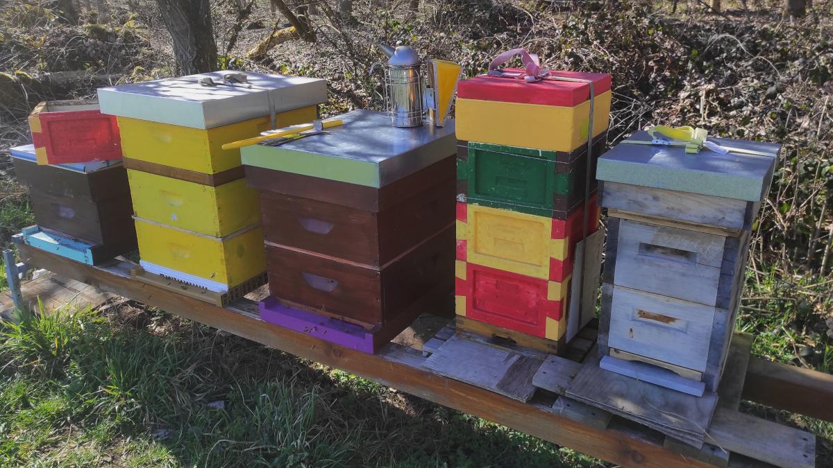 Gurten: Erste Honigräume