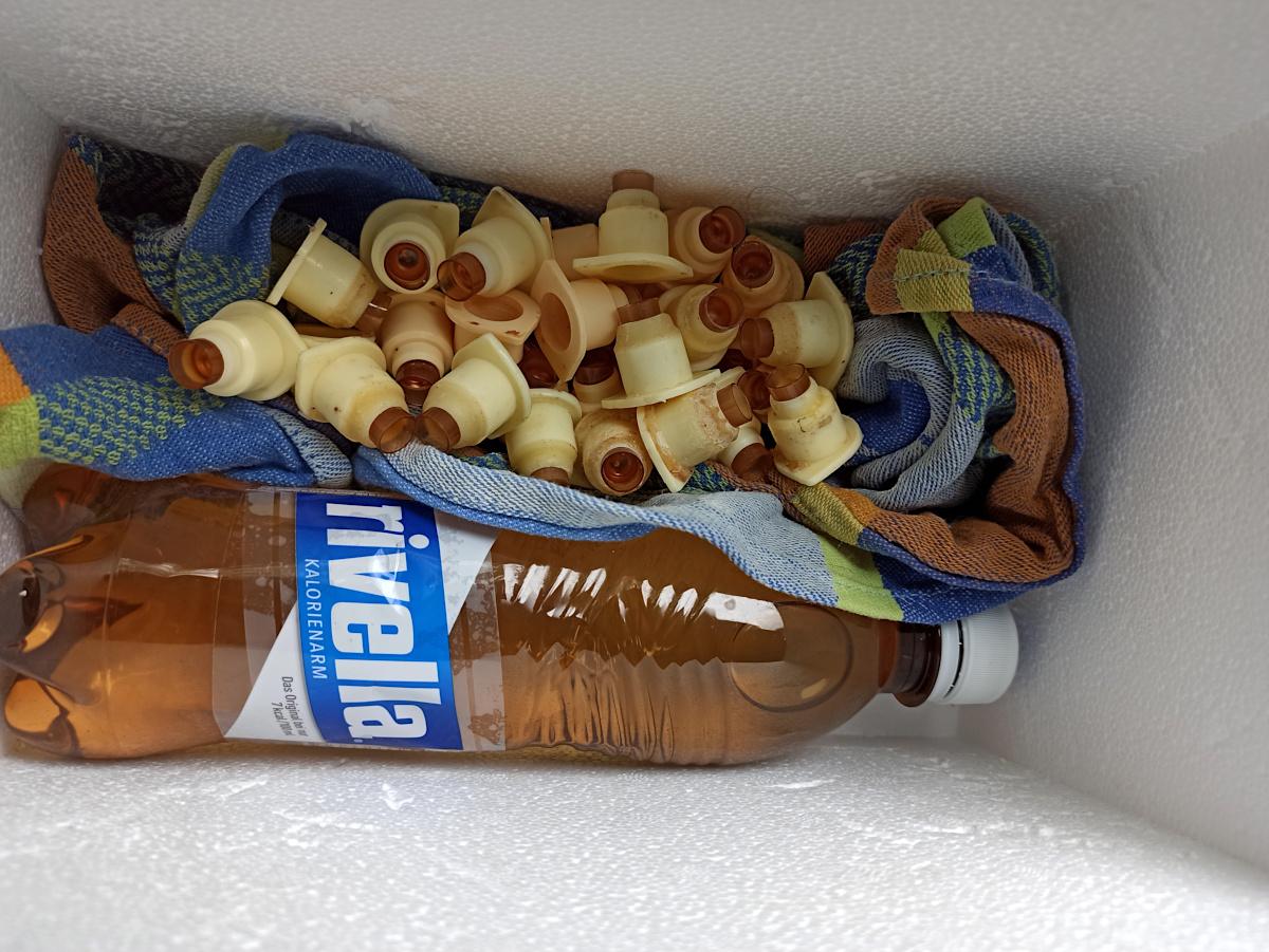 Transport des Zuchtstoffs in einer Styropor-Box, einem feutchten Tuch und einer Flasche mit warmen Wasser.
